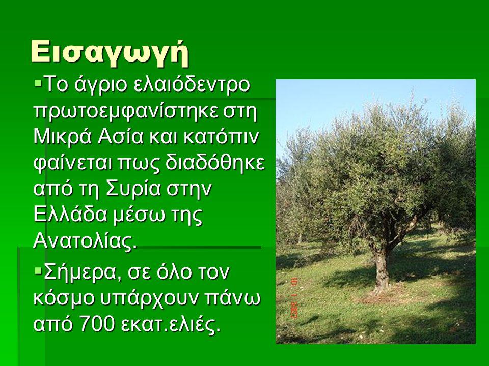 Εισαγωγή  Το άγριο ελαιόδεντρο πρωτοεμφανίστηκε στη Μικρά Ασία και κατόπιν φαίνεται πως διαδόθηκε από τη Συρία στην Ελλάδα μέσω της Ανατολίας.  Σήμε