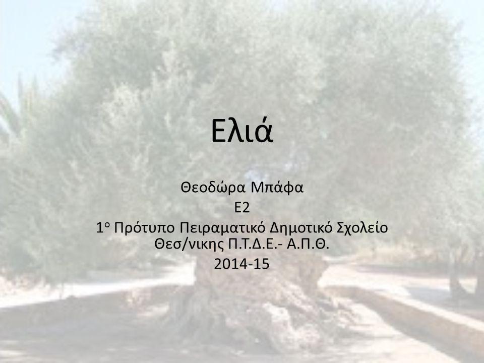 Ελιά Η ελιά είναι γνωστή από τους αρχαιότατους χρόνους, και πιθανότατα κατάγεται από το χώρο της ανατολικής Μεσογείου.
