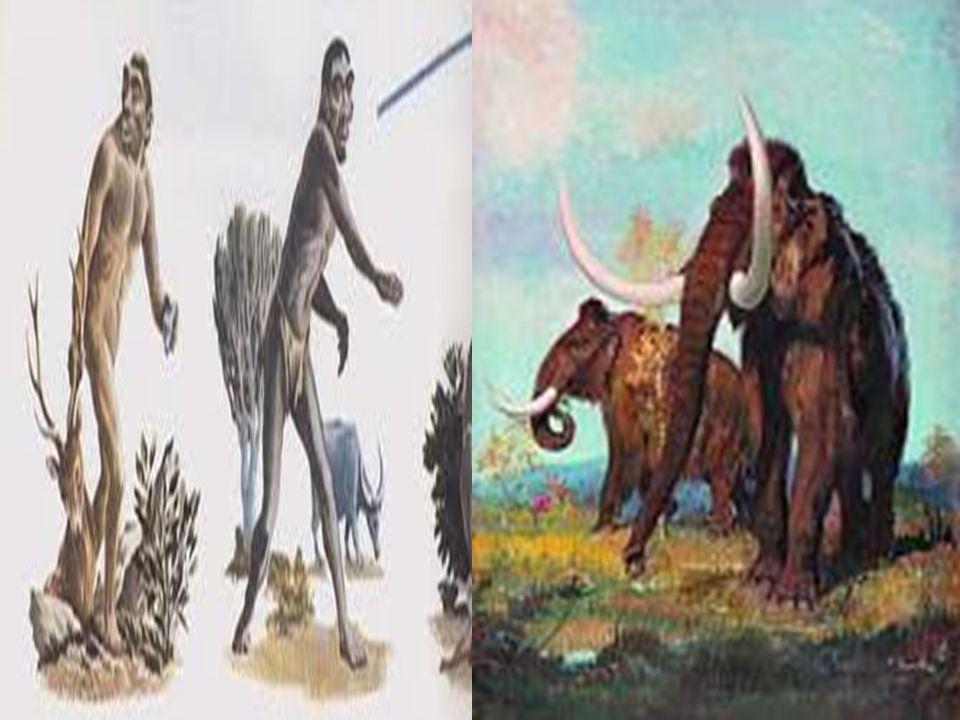 Εργαλεία, όπλα, και ενδυμασία  Ο άνθρωπος της Παλαιολιθικής- Μεσολιθικής εποχής κατασκεύαζε τα εργαλεία του και τα όπλα του κυρίως από πέτρες, αλλά και από οστά και κέρατα ζώων.