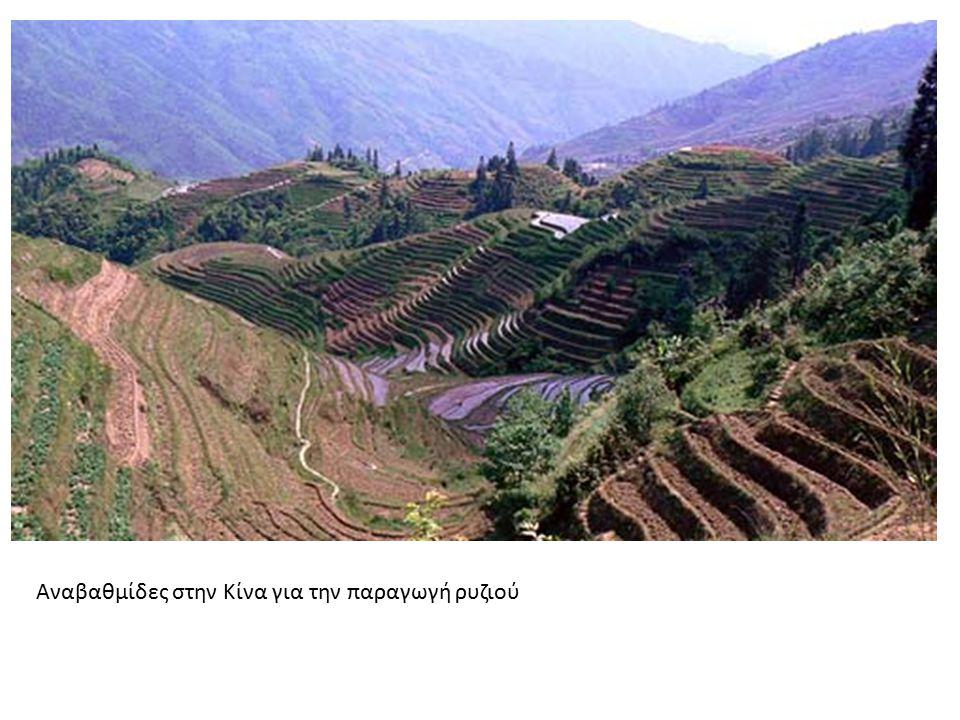 Αναβαθμίδες στην Κίνα για την παραγωγή ρυζιού