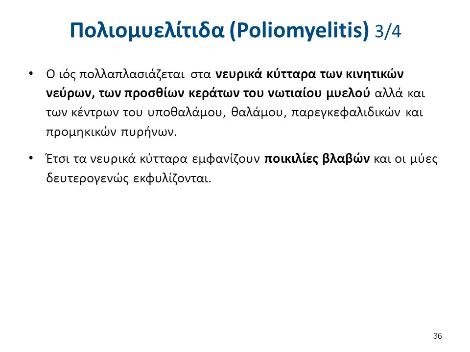 Πολιομυελίτιδα (Poliomyelitis) 3/4 Ο ιός πολλαπλασιάζεται στα νευρικά κύτταρα των κινητικών νεύρων, των προσθίων κεράτων του νωτιαίου μυελού αλλά και