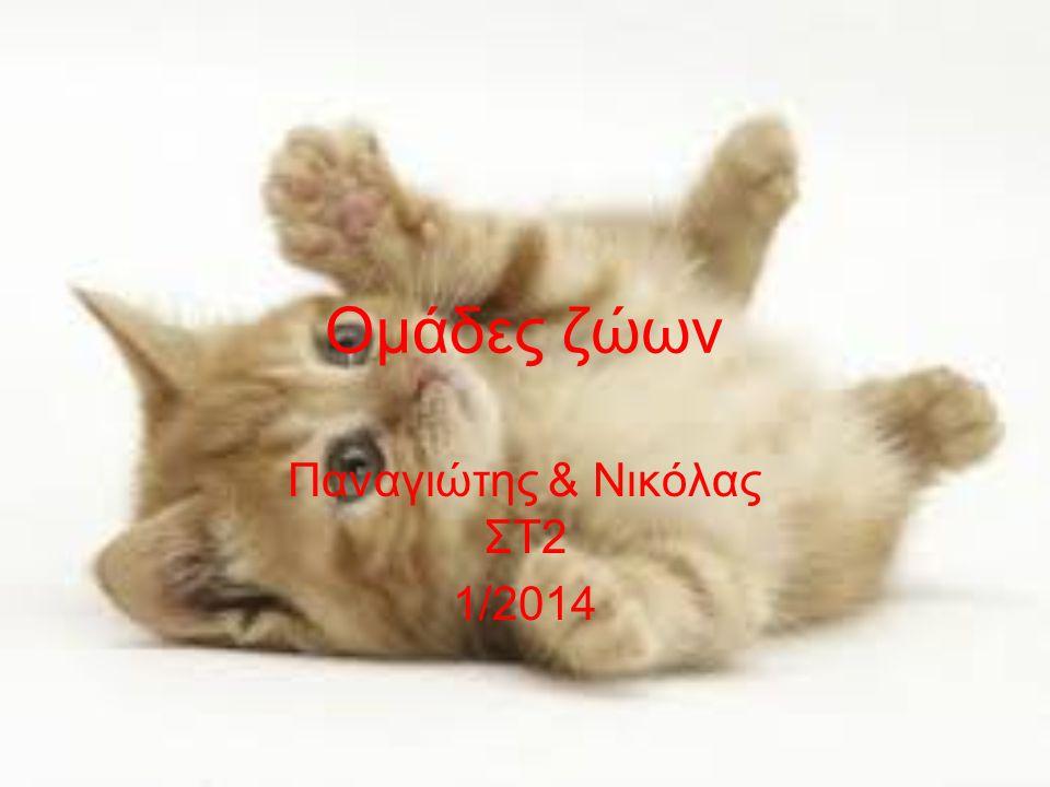 Ομάδες ζώων Παναγιώτης & Νικόλας ΣΤ2 1/2014