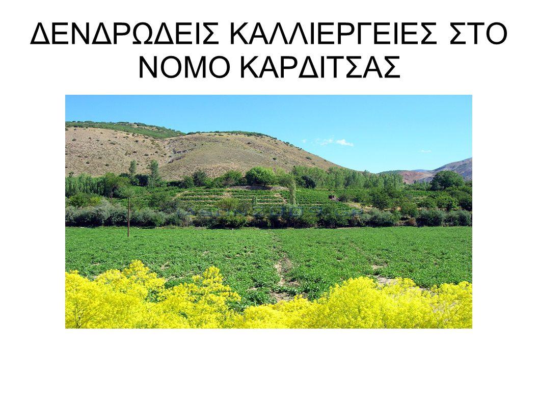 ΔΕΝΔΡΩΔΕΙΣ ΚΑΛΛΙΕΡΓΕΙΕΣ ΣΤΟ ΝΟΜΟ ΚΑΡΔΙΤΣΑΣ