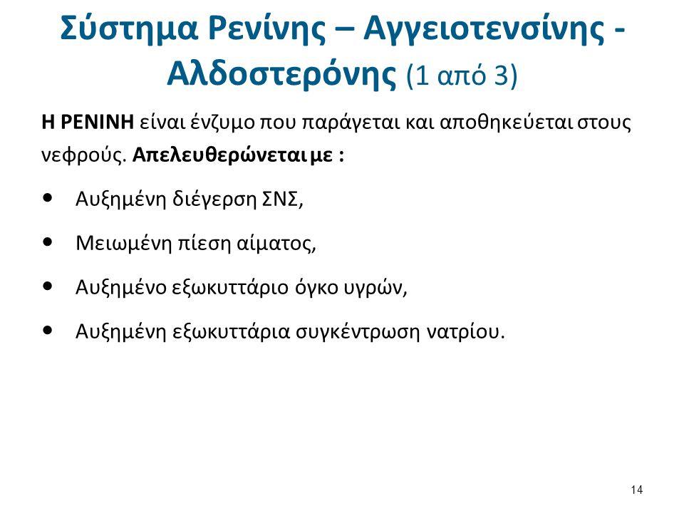 Σύστημα Ρενίνης – Αγγειοτενσίνης - Αλδοστερόνης (1 από 3) H ΡΕΝΙΝΗ είναι ένζυμο που παράγεται και αποθηκεύεται στους νεφρούς. Απελευθερώνεται με : Αυξ