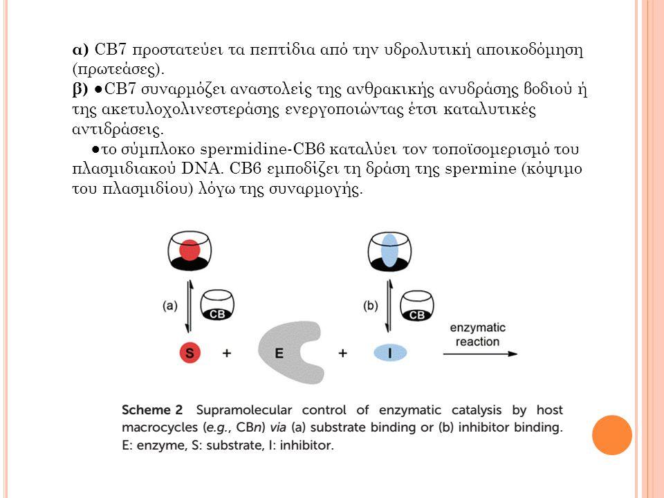 α) CB7 προστατεύει τα πεπτίδια από την υδρολυτική αποικοδόμηση (πρωτεάσες).