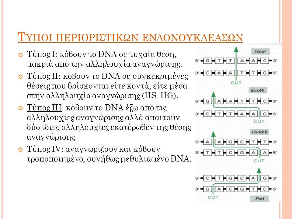 Τ ΥΠΟΙ ΠΕΡΙΟΡΙΣΤΙΚΩΝ ΕΝΔΟΝΟΥΚΛΕΑΣΩΝ Τύπος Ι: κόβουν το DNA σε τυχαία θέση, μακριά από την αλληλουχία αναγνώρισης.