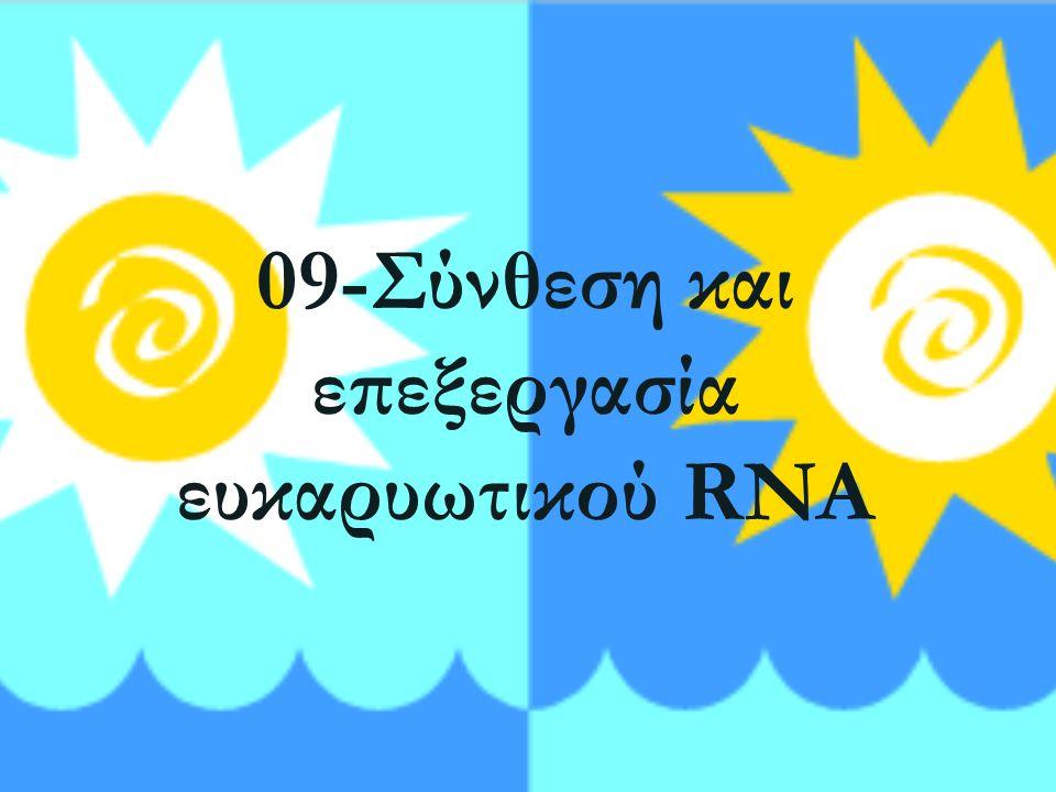 09-Σύνθεση και επεξεργασία ευκαρυωτικού RNA