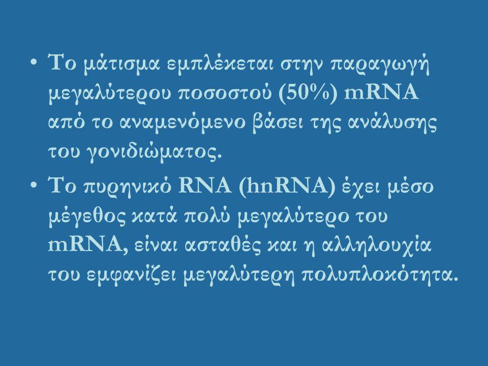 Το μάτισμα εμπλέκεται στην παραγωγή μεγαλύτερου ποσοστού (50%) mRNA από το αναμενόμενο βάσει της ανάλυσης του γονιδιώματος. Το πυρηνικό RNA (hnRNA) έχ
