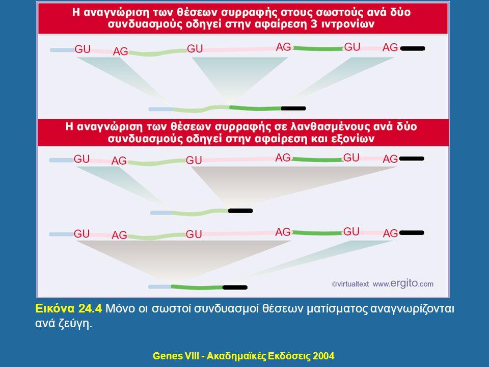 Genes VIII - Ακαδημαϊκές Εκδόσεις 2004 Εικόνα 24.4 Μόνο οι σωστοί συνδυασμοί θέσεων ματίσματος αναγνωρίζονται ανά ζεύγη.