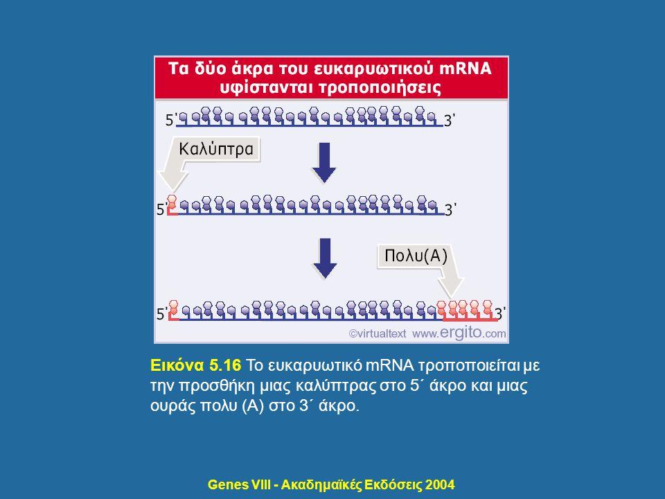 Genes VIII - Ακαδημαϊκές Εκδόσεις 2004 Εικόνα 5.16 Το ευκαρυωτικό mRNA τροποποιείται με την προσθήκη μιας καλύπτρας στο 5΄ άκρο και μιας ουράς πολυ (Α