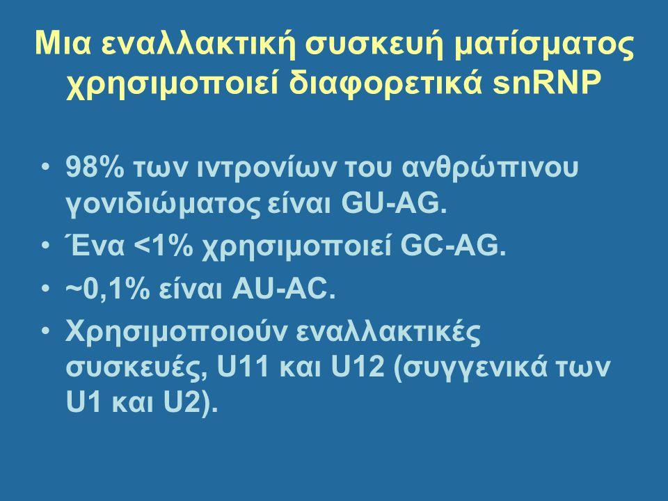 Μια εναλλακτική συσκευή ματίσματος χρησιμοποιεί διαφορετικά snRNP 98% των ιντρονίων του ανθρώπινου γονιδιώματος είναι GU-AG. Ένα <1% χρησιμοποιεί GC-A