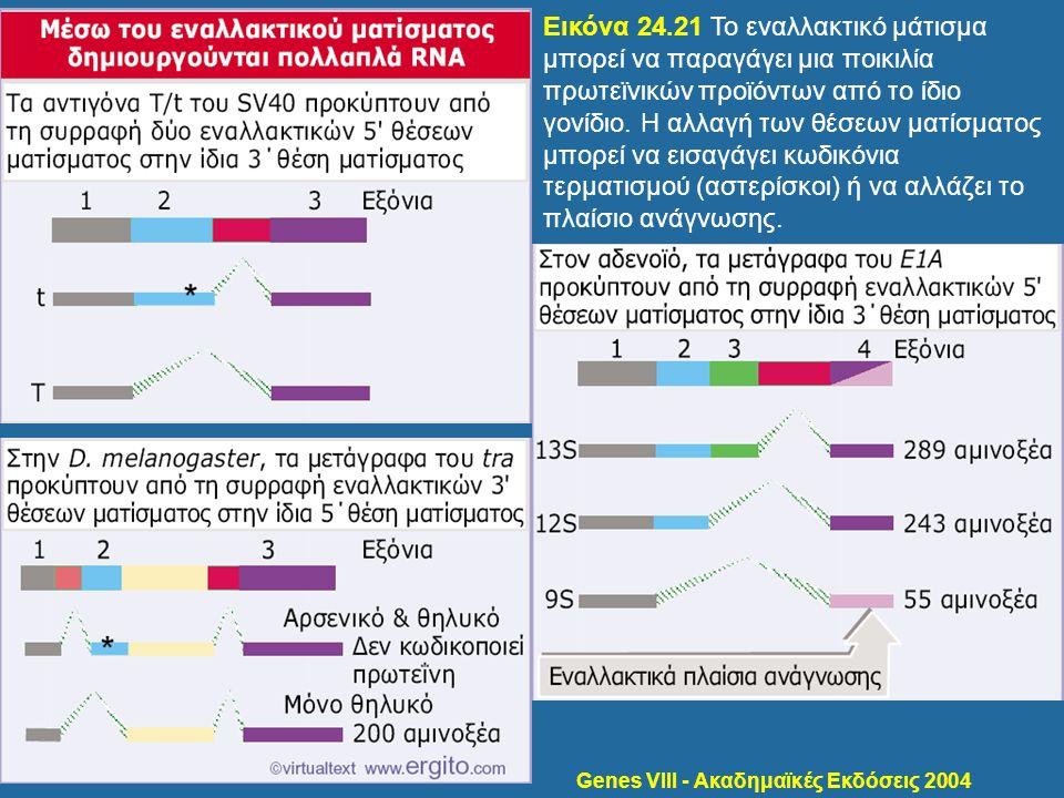 Genes VIII - Ακαδημαϊκές Εκδόσεις 2004 Εικόνα 24.21 Το εναλλακτικό μάτισμα μπορεί να παραγάγει μια ποικιλία πρωτεϊνικών προϊόντων από το ίδιο γονίδιο.