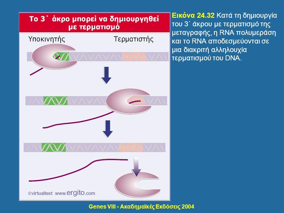 Genes VIII - Ακαδημαϊκές Εκδόσεις 2004 Εικόνα 24.32 Κατά τη δημιουργία του 3΄ άκρου με τερματισμό της μεταγραφής, η RNA πολυμεράση και το RNA αποδεσμε