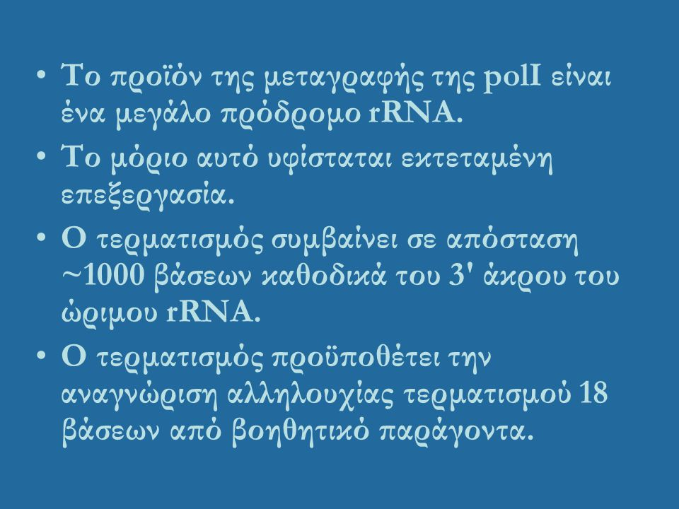 Το προϊόν της μεταγραφής της polI είναι ένα μεγάλο πρόδρομο rRNA. Το μόριο αυτό υφίσταται εκτεταμένη επεξεργασία. Ο τερματισμός συμβαίνει σε απόσταση