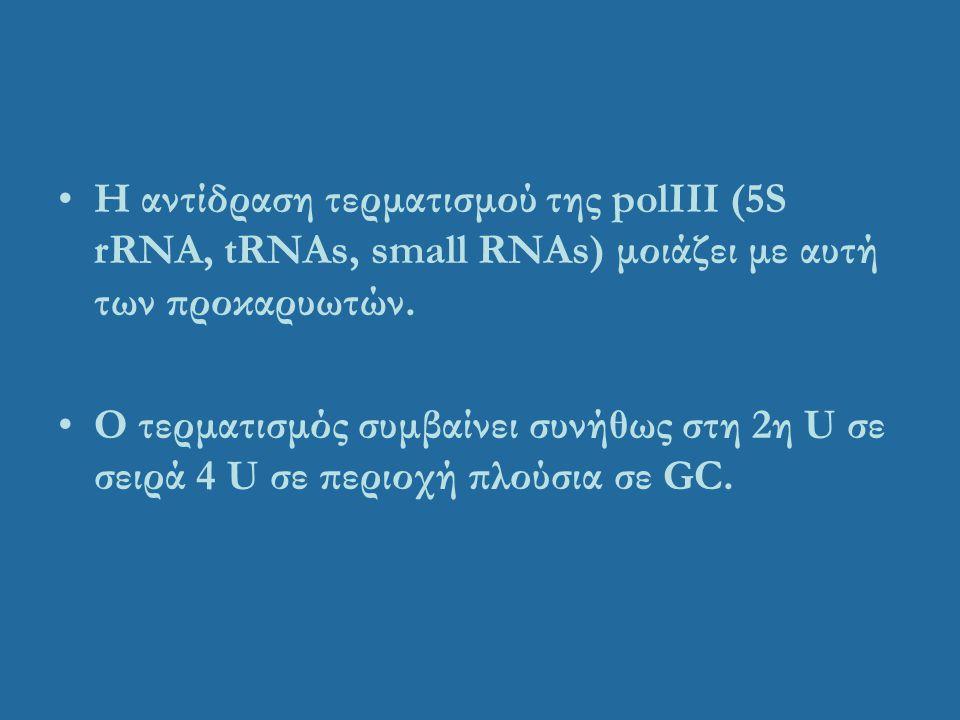 Η αντίδραση τερματισμού της polIII (5S rRNA, tRNAs, small RNAs) μοιάζει με αυτή των προκαρυωτών. Ο τερματισμός συμβαίνει συνήθως στη 2η U σε σειρά 4 U
