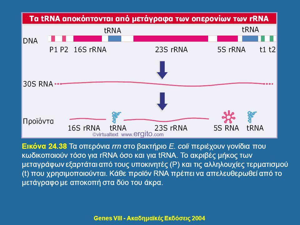 Genes VIII - Ακαδημαϊκές Εκδόσεις 2004 Εικόνα 24.38 Τα οπερόνια rrn στο βακτήριο E. coli περιέχουν γονίδια που κωδικοποιούν τόσο για rRNA όσο και για