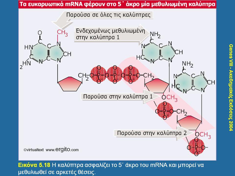 Σκιαγράφηση του φυλοκαθοριστικού μονοπατιού στη Drosophila