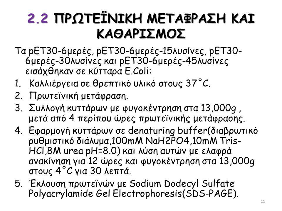 2.2 ΠΡΩΤΕΪΝΙΚΗ ΜΕΤΑΦΡΑΣΗ ΚΑΙ ΚΑΘΑΡΙΣΜΟΣ Τα pET30-6μερές, pET30-6μερές-15λυσίνες, pET30- 6μερές-30λυσίνες και pET30-6μερές-45λυσίνες εισάχθηκαν σε κύττ