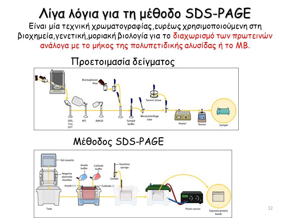 Λίγα λόγια για τη μέθοδο SDS-PAGE Λίγα λόγια για τη μέθοδο SDS-PAGE Είναι μία τεχνική χρωματογραφίας,ευρέως χρησιμοποιούμενη στη βιοχημεία,γενετική,μοριακή βιολογία για το διαχωρισμό των πρωτεινών ανάλογα με το μήκος της πολυπετιδικής αλυσίδας ή το ΜΒ.