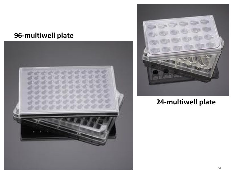 24-multiwell plate 96-multiwell plate 24