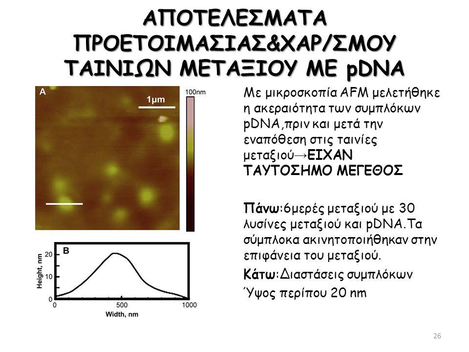 ΑΠΟΤΕΛΕΣΜΑΤΑ ΠΡΟΕΤΟΙΜΑΣΙΑΣ&ΧΑΡ/ΣΜΟΥ ΤΑΙΝΙΩΝ ΜΕΤΑΞΙΟΥ ΜΕ pDNA Με μικροσκοπία ΑFM μελετήθηκε η ακεραιότητα των συμπλόκων pDNA,πριν και μετά την εναπόθεσ