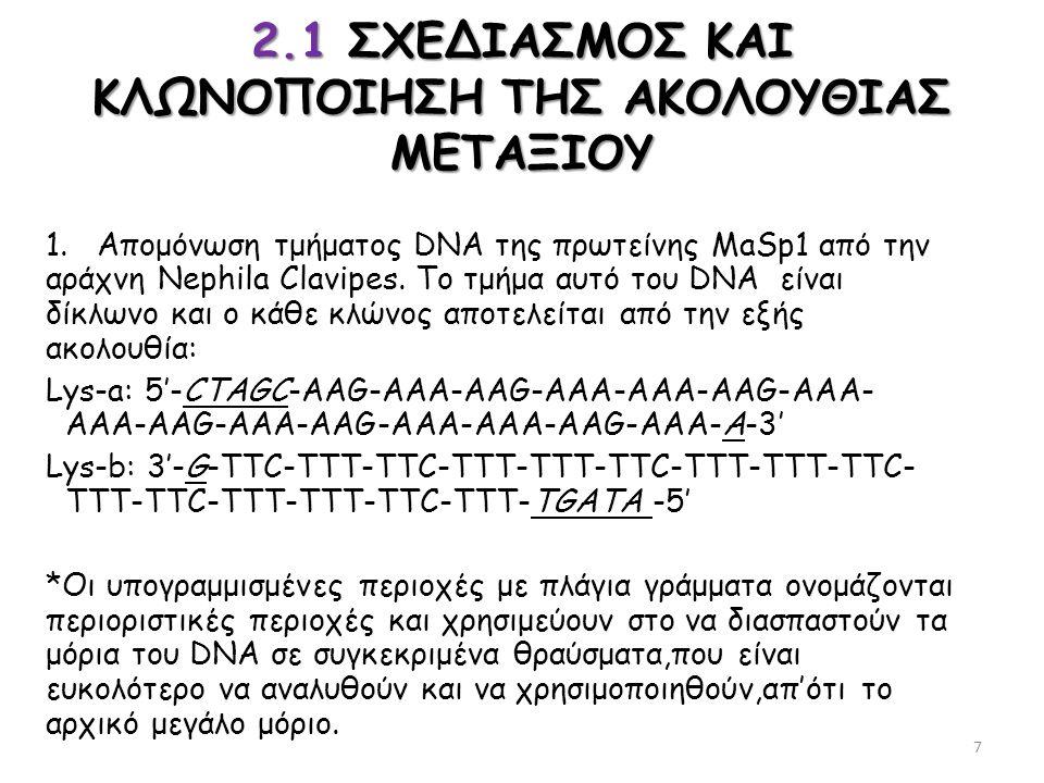 2.1 ΣΧΕΔΙΑΣΜΟΣ ΚΑΙ ΚΛΩΝΟΠΟΙΗΣΗ ΤΗΣ ΑΚΟΛΟΥΘΙΑΣ ΜΕΤΑΞΙΟΥ 1. Απομόνωση τμήματος DNA της πρωτείνης MaSp1 από την αράχνη Nephila Clavipes. Το τμήμα αυτό το