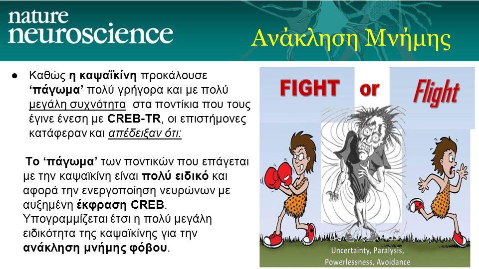 ●Καθώς η καψαΐκίνη προκάλουσε 'πάγωμα' πολύ γρήγορα και με πολύ μεγάλη συχνότητα στα ποντίκια που τους έγινε ένεση με CREB-TR, οι επιστήμονες κατάφεραν και απέδειξαν ότι: Το 'πάγωμα' των ποντικών που επάγεται με την καψαϊκίνη είναι πολύ ειδικό και αφορά την ενεργοποίηση νευρώνων με αυξημένη έκφραση CREB.