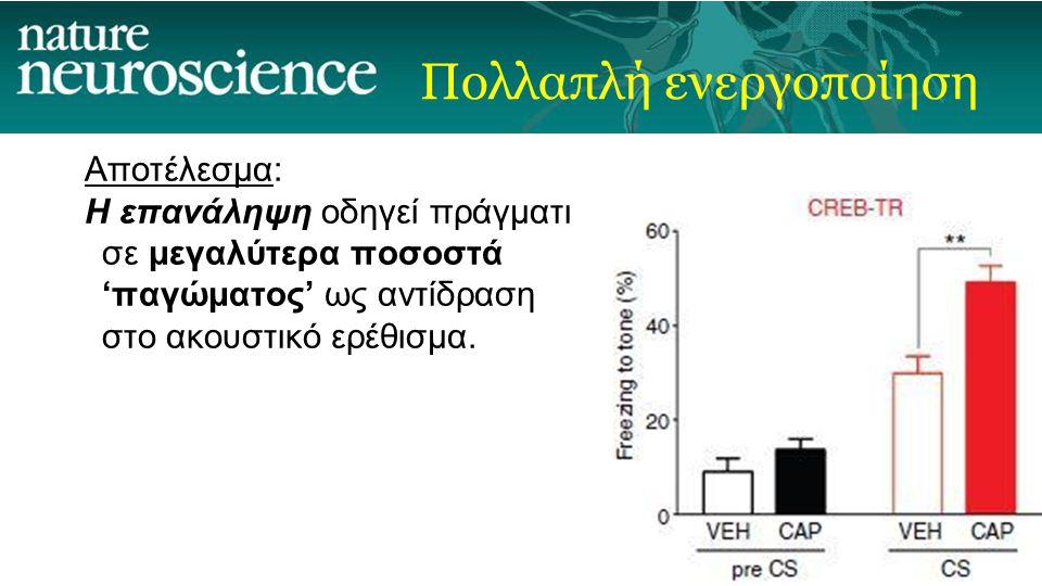 Πολλαπλή ενεργοποίηση Αποτέλεσμα: Η επανάληψη οδηγεί πράγματι σε μεγαλύτερα ποσοστά 'παγώματος' ως αντίδραση στο ακουστικό ερέθισμα.