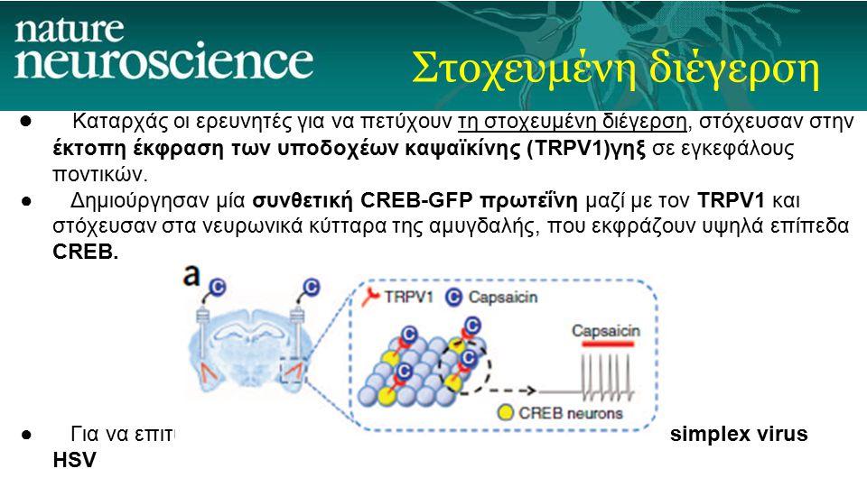 Στοχευμένη διέγερση ● Καταρχάς οι ερευνητές για να πετύχουν τη στοχευμένη διέγερση, στόχευσαν στην έκτοπη έκφραση των υποδοχέων καψαϊκίνης (TRPV1)γηξ σε εγκεφάλους ποντικών.