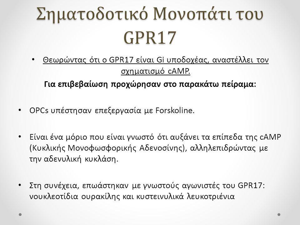 Σηματοδοτικό Μονοπάτι του GPR17 Θεωρώντας ότι ο GPR17 είναι Gi υποδοχέας, αναστέλλει τον σχηματισμό cAMP. Για επιβεβαίωση προχώρησαν στο παρακάτω πείρ
