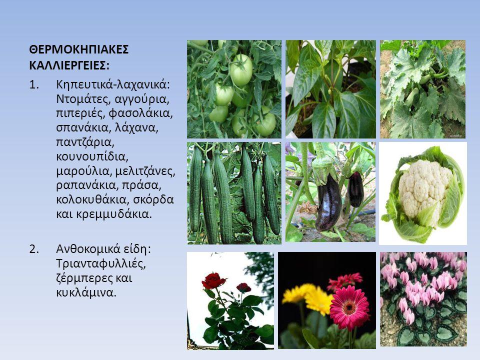 ΘΕΡΜΟΚΗΠΙΑΚΕΣ ΚΑΛΛΙΕΡΓΕΙΕΣ: 1.Κηπευτικά-λαχανικά: Ντομάτες, αγγούρια, πιπεριές, φασολάκια, σπανάκια, λάχανα, παντζάρια, κουνουπίδια, μαρούλια, μελιτζά