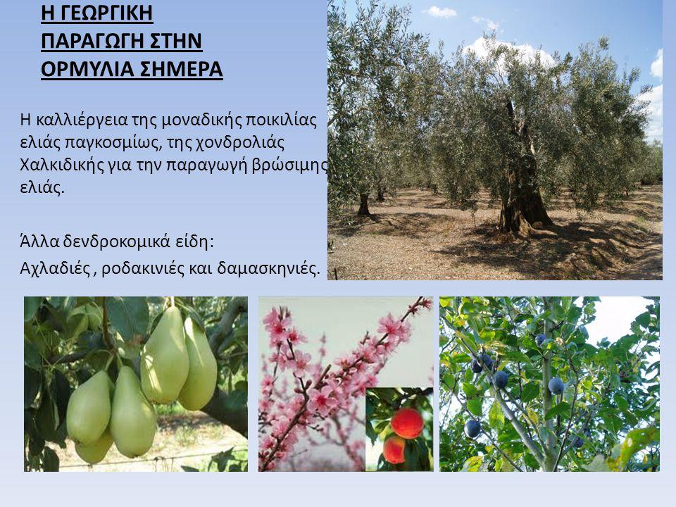 Η ΓΕΩΡΓΙΚΗ ΠΑΡΑΓΩΓΗ ΣΤΗΝ ΟΡΜΥΛΙΑ ΣΗΜΕΡΑ Η καλλιέργεια της μοναδικής ποικιλίας ελιάς παγκοσμίως, της χονδρολιάς Χαλκιδικής για την παραγωγή βρώσιμης ελ