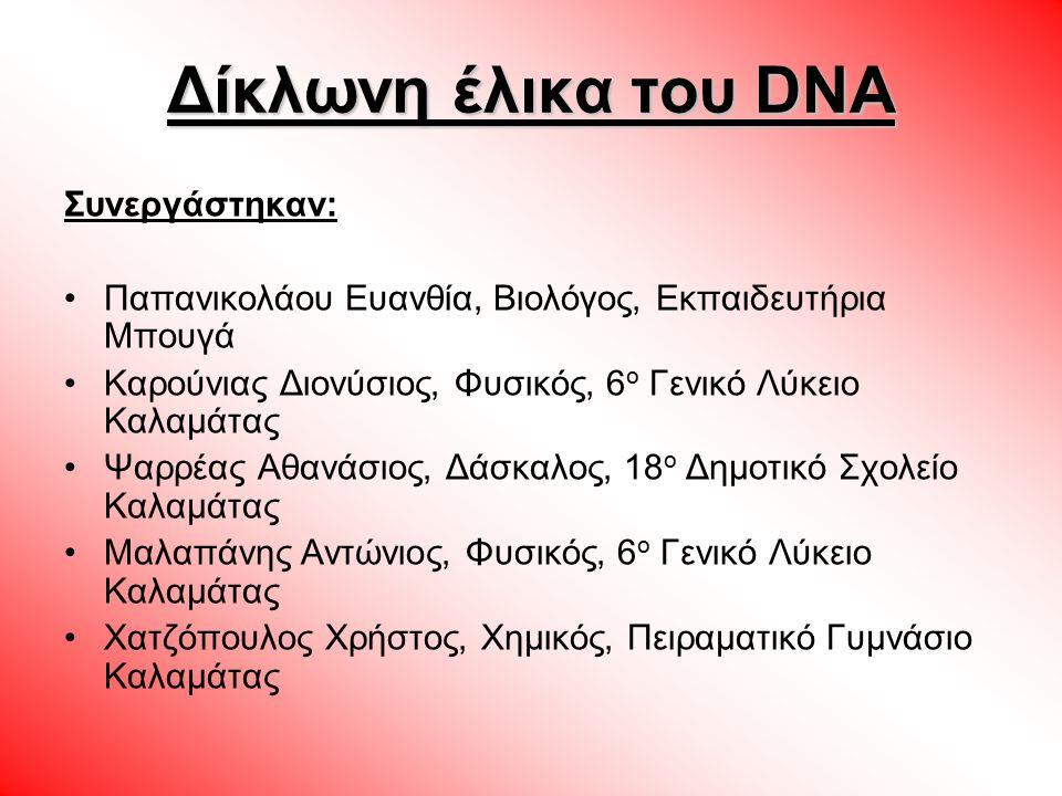 Η μορφή του νουκλεοτιδιου στο μοντέλο Α Α ντιστοιχίζουμε τα δομικά υλικά του μορίου του DNA με τρισδιάστατα αντικείμενα που θα συνδέσουμε μεταξύ τους και θα δημιουργήσουμε μια διπλή έλικα με δέκα σκαλιά, προσομοιώνοντας έτσι το μόριο του DNA.