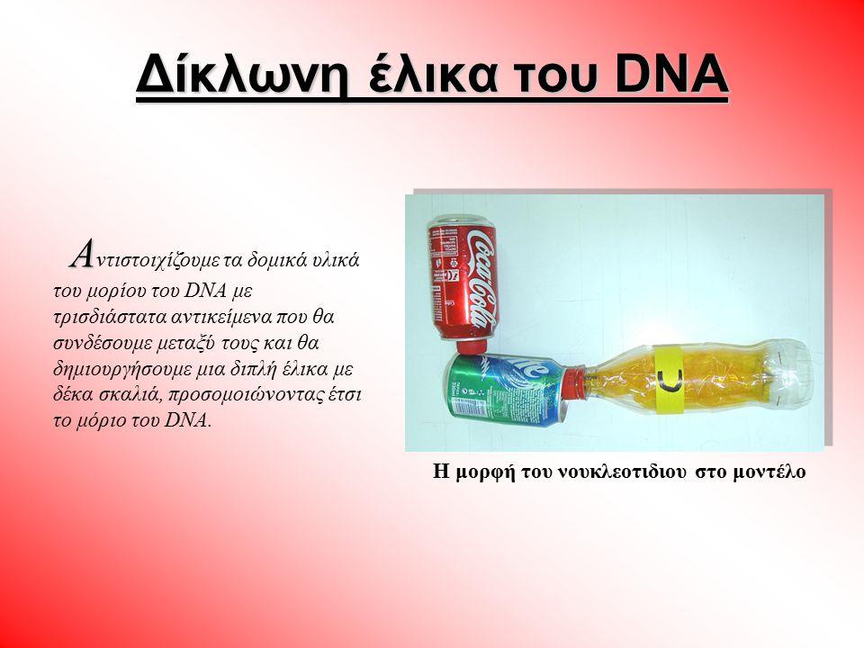 Η μορφή του νουκλεοτιδιου στο μοντέλο Α Α ντιστοιχίζουμε τα δομικά υλικά του μορίου του DNA με τρισδιάστατα αντικείμενα που θα συνδέσουμε μεταξύ τους