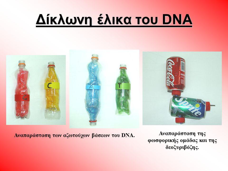 ΑΝΤΙΣΤΟΙΧΙΑ ΜΕΤΑΞΥ ΔΟΜΙΚΩΝ ΥΛΙΚΩΝ ΜΟΡΙΟΥ DNA ΚΑΙ ΔΟΜΙΚΩΝ ΑΝΤΙΚΕΙΜΕΝΩΝ ΜΟΝΤΕΛΟΥ Δομικά υλικά μορίου DNAΔομικά υλικά μοντέλου Φωσφορική ομάδαΚουτί Coca cola ΔεοξυριβόζηΚουτί sprite Αζωτούχες βάσειςΠλαστικά μπουκάλια αναψυκτικών Δίκλωνη έλικα του DNA Όλα τα υλικά προέρχονται από τον κάδο ανακύκλωσης του σχολείου μας.