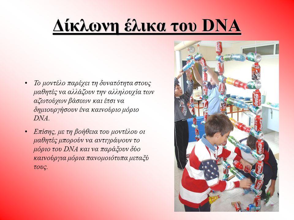 Δίκλωνη έλικα του DNA Το μοντέλο παρέχει τη δυνατότητα στους μαθητές να αλλάζουν την αλληλουχία των αζωτούχων βάσεων και έτσι να δημιουργήσουν ένα και