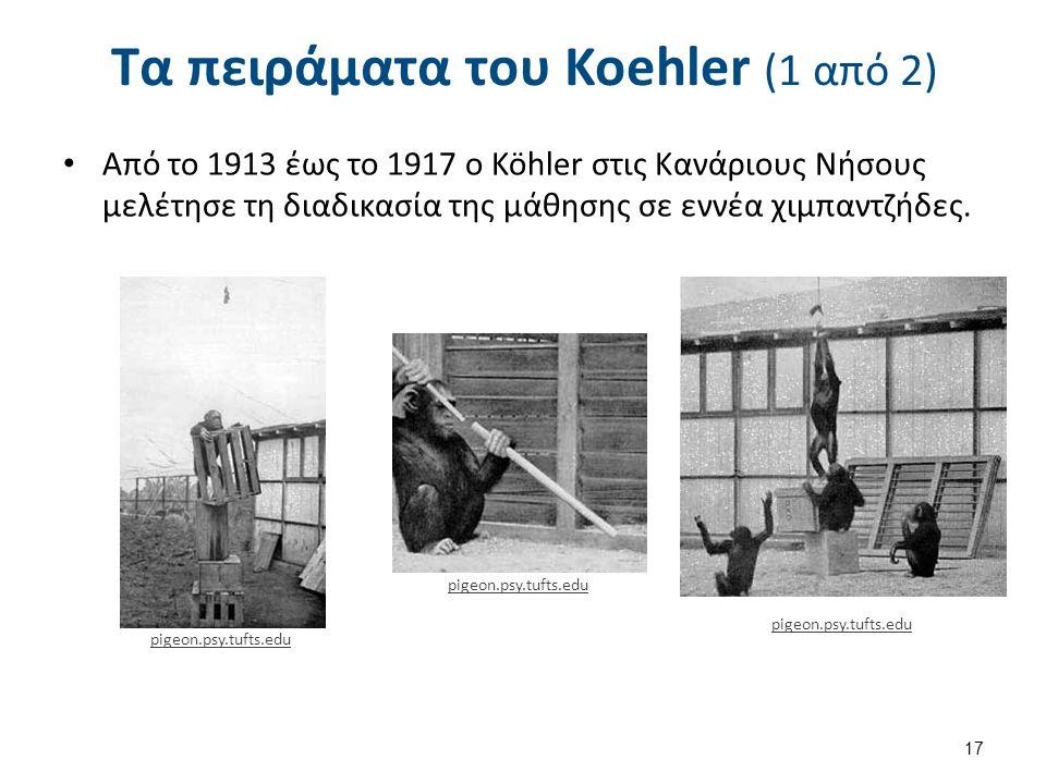Τα πειράματα του Koehler (1 από 2) Από το 1913 έως το 1917 ο Köhler στις Κανάριους Νήσους μελέτησε τη διαδικασία της μάθησης σε εννέα χιμπαντζήδες. 17