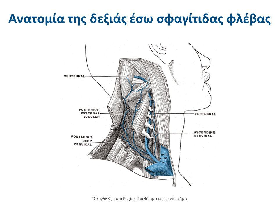 """Ανατομία της δεξιάς έσω σφαγίτιδας φλέβας """"Gray563"""", από Pngbot διαθέσιμο ως κοινό κτήμαGray563Pngbot"""