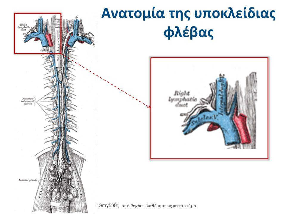 """Ανατομία της υποκλείδιας φλέβας """" Gray599 """", από Pngbot διαθέσιμο ως κοινό κτήμα Gray599Pngbot"""