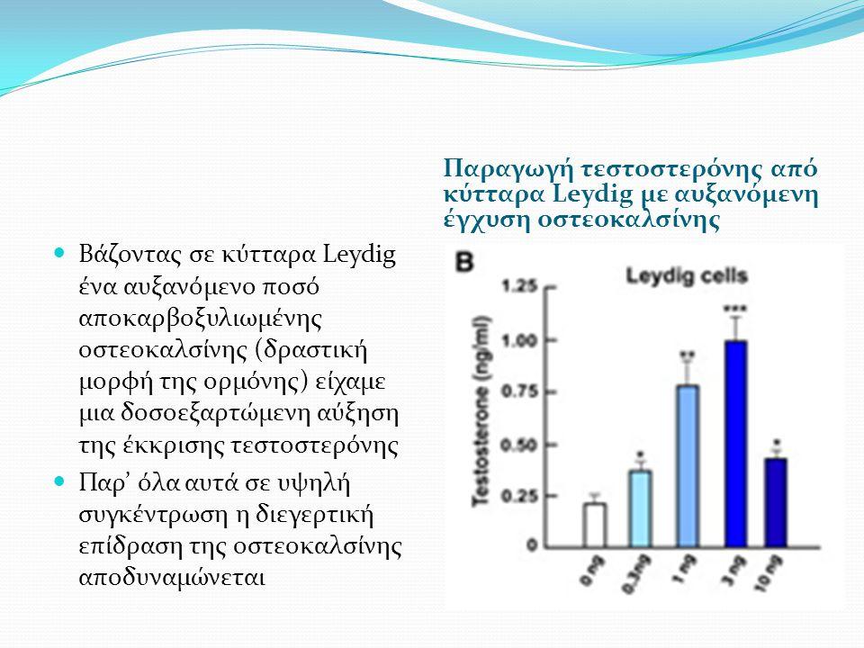 Παραγωγή τεστοστερόνης από κύτταρα Leydig με αυξανόμενη έγχυση οστεοκαλσίνης Βάζοντας σε κύτταρα Leydig ένα αυξανόμενο ποσό αποκαρβοξυλιωμένης οστεοκαλσίνης (δραστική μορφή της ορμόνης) είχαμε μια δοσοεξαρτώμενη αύξηση της έκκρισης τεστοστερόνης Παρ' όλα αυτά σε υψηλή συγκέντρωση η διεγερτική επίδραση της οστεοκαλσίνης αποδυναμώνεται
