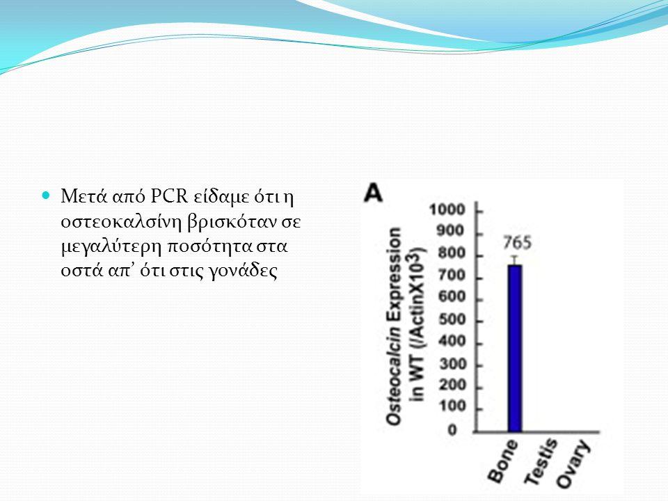 Μετά από PCR είδαμε ότι η οστεοκαλσίνη βρισκόταν σε μεγαλύτερη ποσότητα στα οστά απ' ότι στις γονάδες
