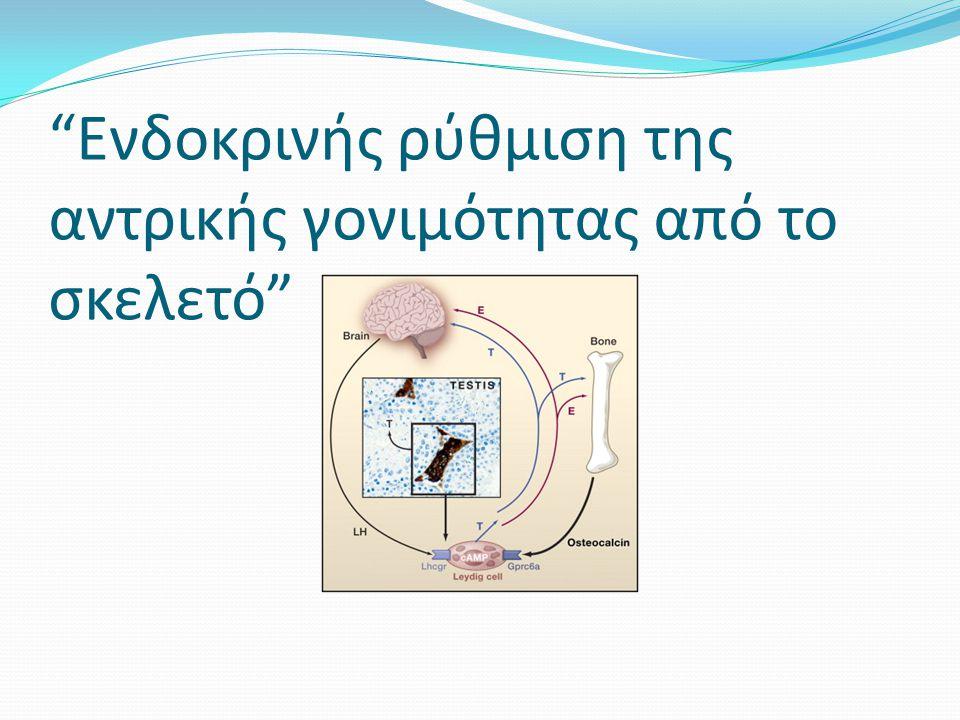 Στη συνεχεία… Χρησιμοποιήθηκαν ραδιοανοσολογικά για την μέτρηση των επιπέδων τεστοστερόνης οιστροδιόλης και προγεστερόνης Από τα πειράματα φαίνεται ότι αυξήθηκε σημαντικά η έκκριση τεστοστερόνης(B) από τους όρχεις των εκφύτων Ενώ δεν επηρεάστηκε η έκκριση οιστροδιόλης(C) και προγεστερόνης (D)