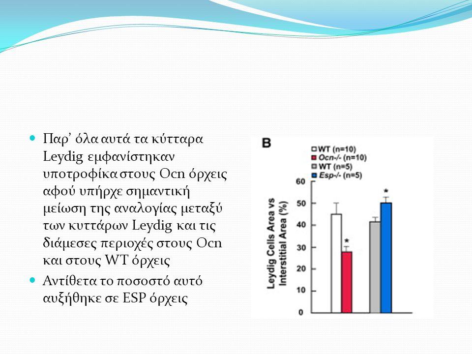 Παρ' όλα αυτά τα κύτταρα Leydig εμφανίστηκαν υποτροφίκα στους Ocn όρχεις αφού υπήρχε σημαντική μείωση της αναλογίας μεταξύ των κυττάρων Leydig και τις διάμεσες περιοχές στους Ocn και στους WT όρχεις Αντίθετα το ποσοστό αυτό αυξήθηκε σε ESP όρχεις