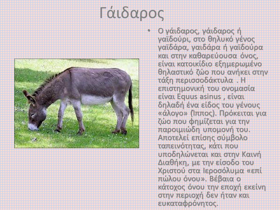 Γάιδαρος O γάιδαρος, γάιδαρος ή γαϊδούρι, στο θηλυκό γένος γαϊδάρα, γαιδάρα ή γαϊδούρα και στην καθαρεύουσα όνος, είναι κατοικίδιο εξημερωμένο θηλαστι