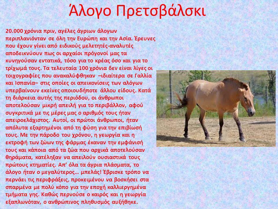 Άλογο Πρετσβάλσκι 20.000 χρόνια πριν, αγέλες άγριων άλογων περιπλανιόνταν σε όλη την Ευρώπη και την Ασία. Έρευνες που έχουν γίνει από ειδικούς μελετητ