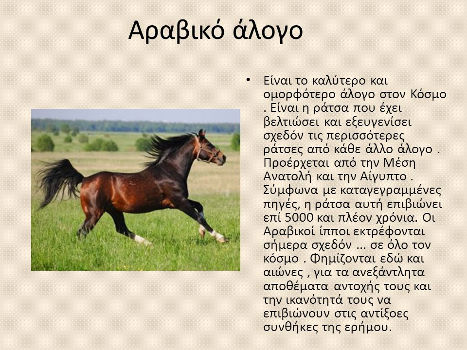 Αραβικό άλογο Είναι το καλύτερο και ομορφότερο άλογο στον Κόσμο. Είναι η ράτσα που έχει βελτιώσει και εξευγενίσει σχεδόν τις περισσότερες ράτσες από κ