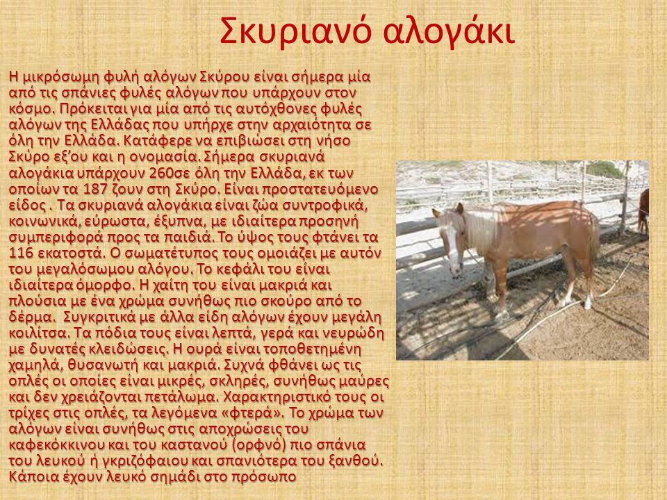 Σκυριανό αλογάκι Η μικρόσωμη φυλή αλόγων Σκύρου είναι σήμερα μία από τις σπάνιες φυλές αλόγων που υπάρχουν στον κόσμο. Πρόκειται για μία από τις αυτόχ