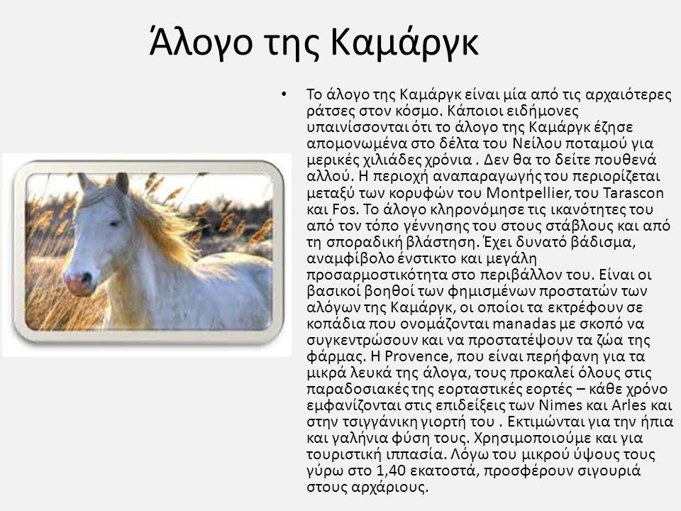 Άλογο της Καμάργκ Το άλογο της Καμάργκ είναι μία από τις αρχαιότερες ράτσες στον κόσμο. Κάποιοι ειδήμονες υπαινίσσονται ότι το άλογο της Καμάργκ έζησε