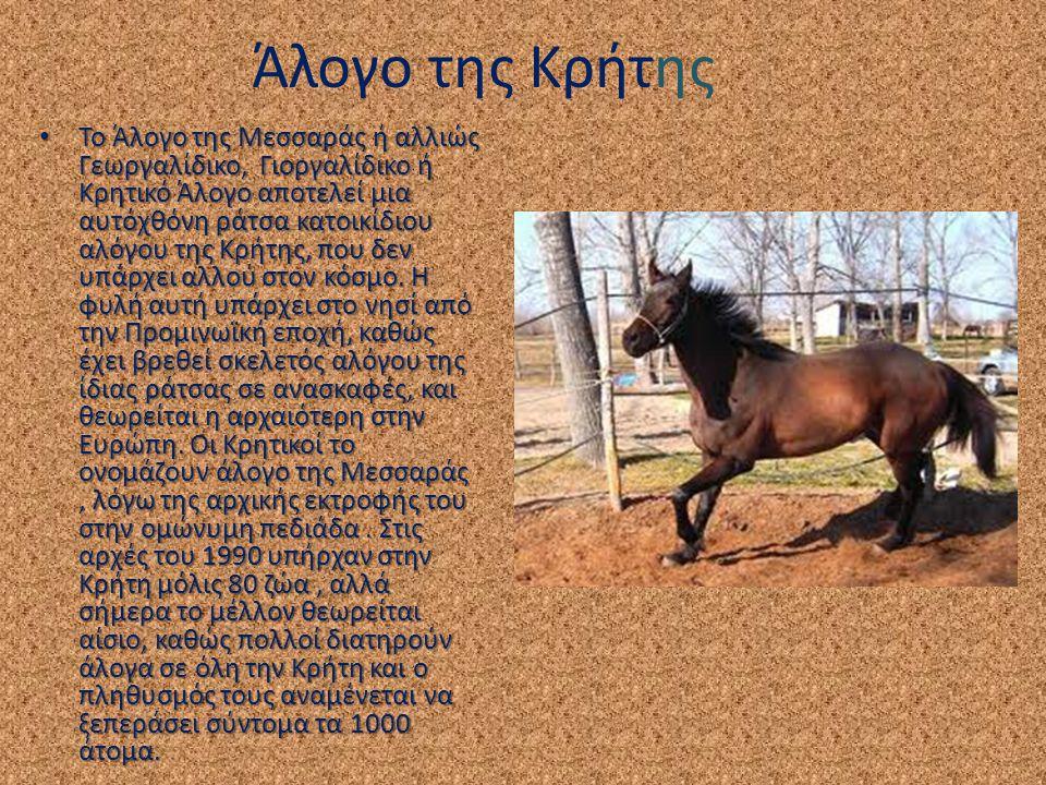 Άλογο της Κρήτης Το Άλογο της Μεσσαράς ή αλλιώς Γεωργαλίδικο, Γιοργαλίδικο ή Κρητικό Άλογο αποτελεί μια αυτόχθόνη ράτσα κατοικίδιου αλόγου της Κρήτης,