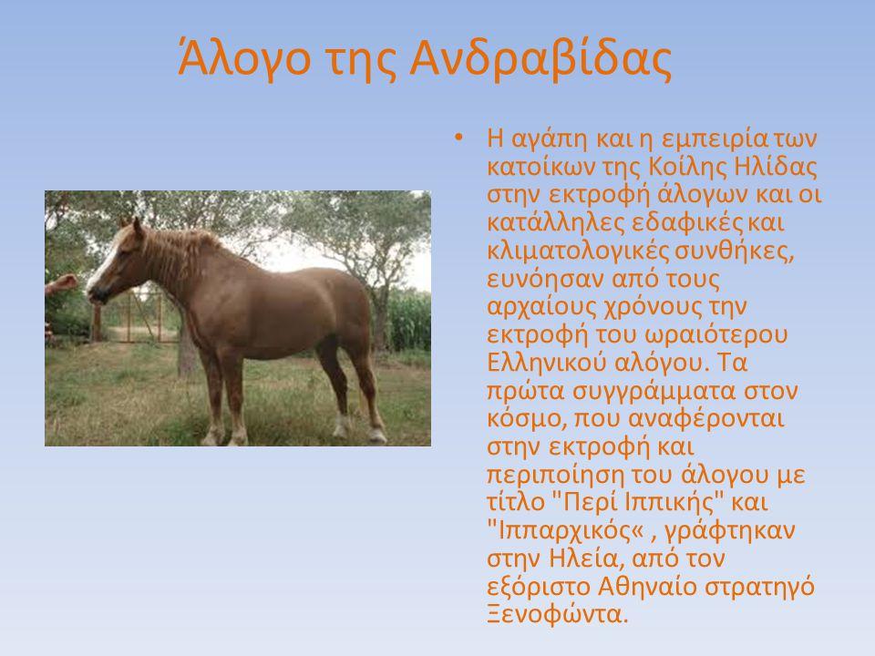 Άλογο της Ανδραβίδας Η αγάπη και η εμπειρία των κατοίκων της Κοίλης Hλίδας στην εκτροφή άλογων και οι κατάλληλες εδαφικές και κλιματολογικές συνθήκες,